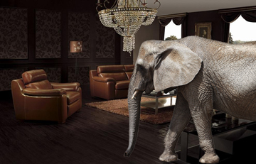The Elephant In Alternative Investment Living Room